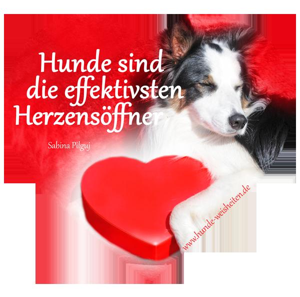 Ein Herzensgruss an alle die hunde lieben